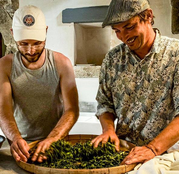 Deux personnes en train de travailler le thé